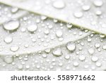 Small photo of Closeup image of water drop on the backof jackfruit leaf. Canted angle