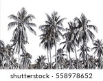 digital illustration   tropical ... | Shutterstock . vector #558978652