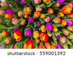 Bouquet Of Multicolor Tulips....