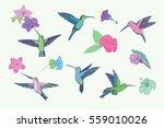hummingbird vector pattern | Shutterstock .eps vector #559010026