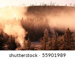 Misty Forest  Yellowstone...