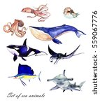 watercolor set of sea fishes ... | Shutterstock . vector #559067776