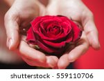 Beautiful Red Rose In Woman...
