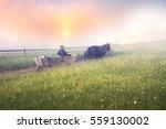 shining fog in carpathians.... | Shutterstock . vector #559130002