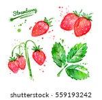 watercolor illustration of wild ... | Shutterstock . vector #559193242