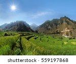 highland agricultural terrace...   Shutterstock . vector #559197868