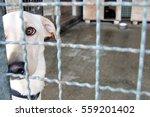 homeless shelter dog behind bars | Shutterstock . vector #559201402