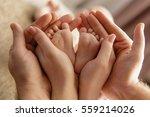 baby feet in parent hands | Shutterstock . vector #559214026