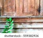 crop of old wood wall window... | Shutterstock . vector #559382926