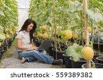 view of asian woman farmer...   Shutterstock . vector #559389382