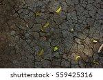 dry  land with multiple cracks... | Shutterstock . vector #559425316