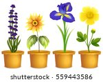 different types of flowers in... | Shutterstock .eps vector #559443586