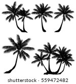 coconut palm tree  cocos... | Shutterstock .eps vector #559472482