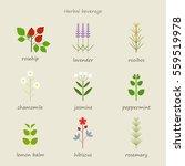 herb healing leaf grass nature... | Shutterstock .eps vector #559519978