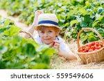happy adorable little kid boy...   Shutterstock . vector #559549606
