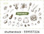 sketches vegetables   cabbage ...   Shutterstock .eps vector #559557226