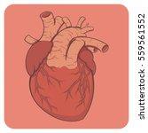 cartoon style layered vector... | Shutterstock .eps vector #559561552