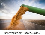 pouring corn grain into tractor ... | Shutterstock . vector #559565362