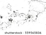 distressed overlay texture of... | Shutterstock .eps vector #559565836