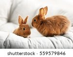 Cute Red Rabbits On Lounge At...