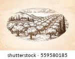 hand drawn olive grove... | Shutterstock .eps vector #559580185