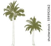 vector illustration on a... | Shutterstock .eps vector #559592362