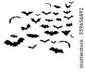 bats fly | Shutterstock .eps vector #559656892