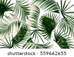 mix green leaves of palm tree... | Shutterstock . vector #559662655