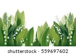 convallaria majalis   lilly of... | Shutterstock .eps vector #559697602