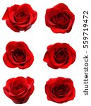 Stock photo red rose blooms 559719472
