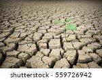 emerging seedlings in the dry... | Shutterstock . vector #559726942