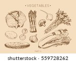 collection of hand drawn... | Shutterstock .eps vector #559728262