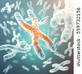 xy chromosome  red in the... | Shutterstock . vector #559732156