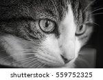 cat   Shutterstock . vector #559752325