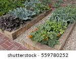 vegetable garden in raised beds ... | Shutterstock . vector #559780252