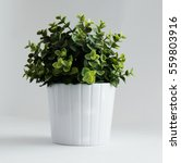 Small photo of Potted Plant
