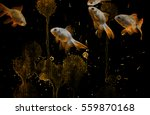 gold and white gold fishes in... | Shutterstock . vector #559870168