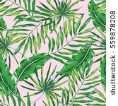 green palm leaves on the pink... | Shutterstock .eps vector #559878208