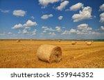 summer wallpaper   bale on... | Shutterstock . vector #559944352