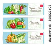 vegetables banners. vector farm ... | Shutterstock .eps vector #560023606