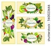 vegetables banners. vegetarian... | Shutterstock .eps vector #560023666