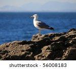 Sea Bird On The Rock