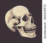 anatomic grunge skull vector... | Shutterstock .eps vector #560125972