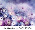 flowers chrysanthemum on blurry ...   Shutterstock . vector #560150356