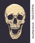 anatomic grunge skull vector... | Shutterstock .eps vector #560155996