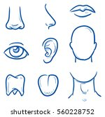 set of different human parts of ...   Shutterstock .eps vector #560228752