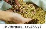 dry malt beans ready to be used ... | Shutterstock . vector #560277796