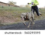 dog and its owner taking part... | Shutterstock . vector #560295595
