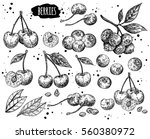 hand drawn sketch style berries ... | Shutterstock .eps vector #560380972