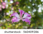 pink flowers   Shutterstock . vector #560409286